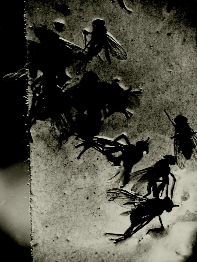 Papier collant et mouches, 1930 Épreuve gélatino-argentique, tirage d'époque Centre Pompidou, musée national d'art moderne, Paris Acquis grâce au mécénat de Yves Rocher, 2011.